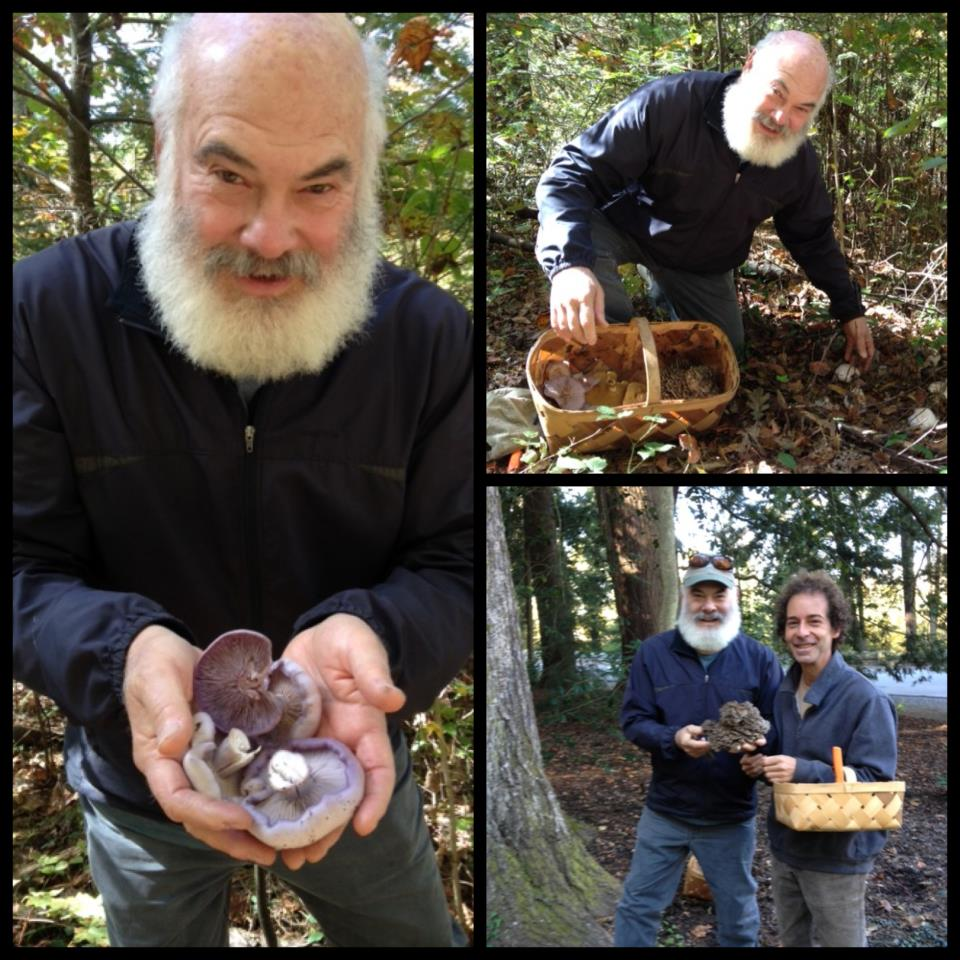 Dr. Andrew Weil Mushrooms