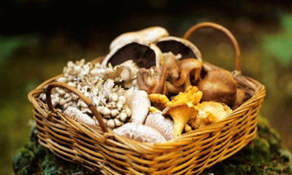 Fantastic Fungi Mushroom Foraging