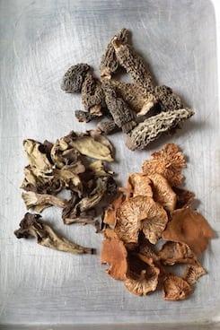 Eugenia Bone and Fantastic Fungi