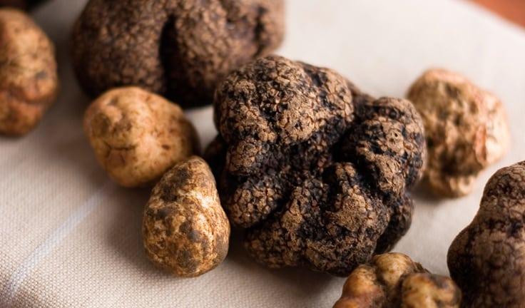 Fantastic Fungi Truffle Trade
