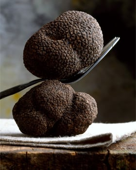 Fantastic Fungi Truffle Trade by Eugenia Bone