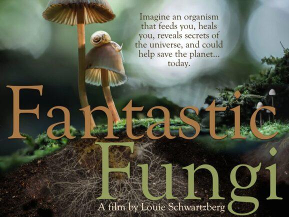 Fantastic Fungi Film