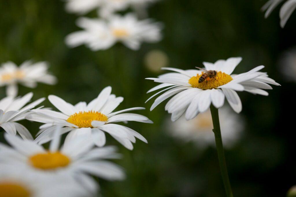 National Wildflower Week