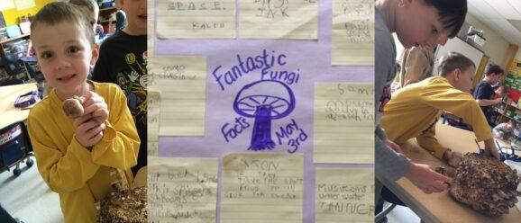 Ridpath Fantastic Fungi