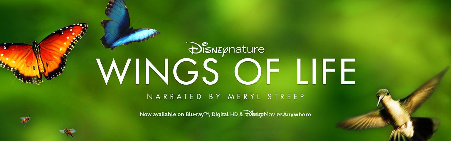 merylstreepwings