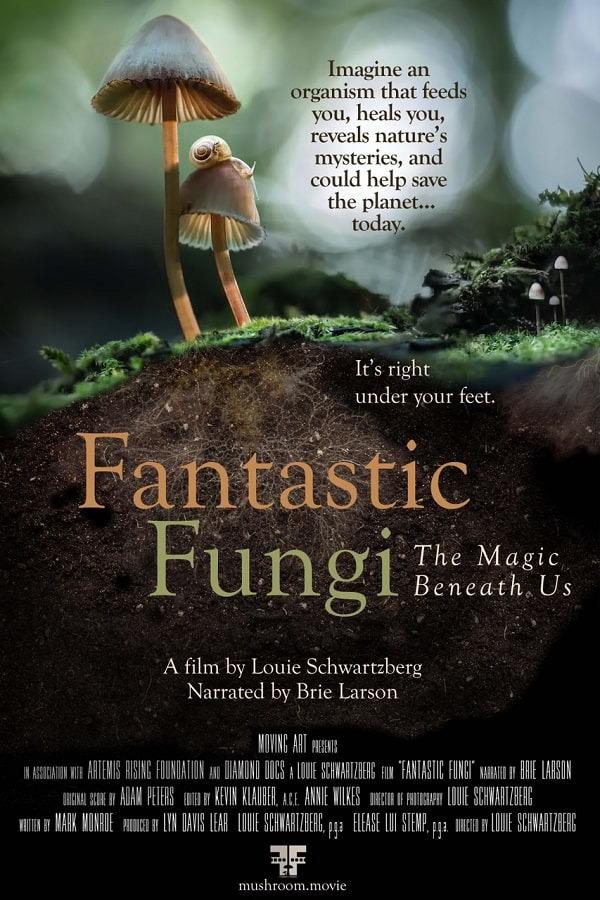 Fantastic Fungi Magic Beneath Us poster