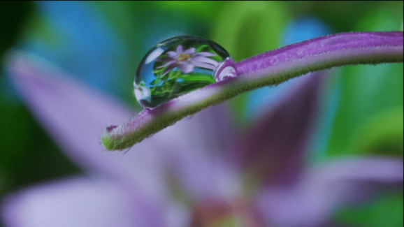 Louie has created many powerful short films to encourage humanity to defend our waterways and keep our water pure. Read on to find out how you can help. Dew Drop. Change your states of consciousness while getting nature therapy the next time you see a dew drop. daily gratitude. Dew Drop