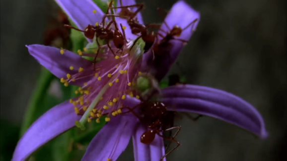 This short Louie Schwartzberg film shows an ants Time lapse of a bee during the pollination process, making an invisible journey visible for all of us