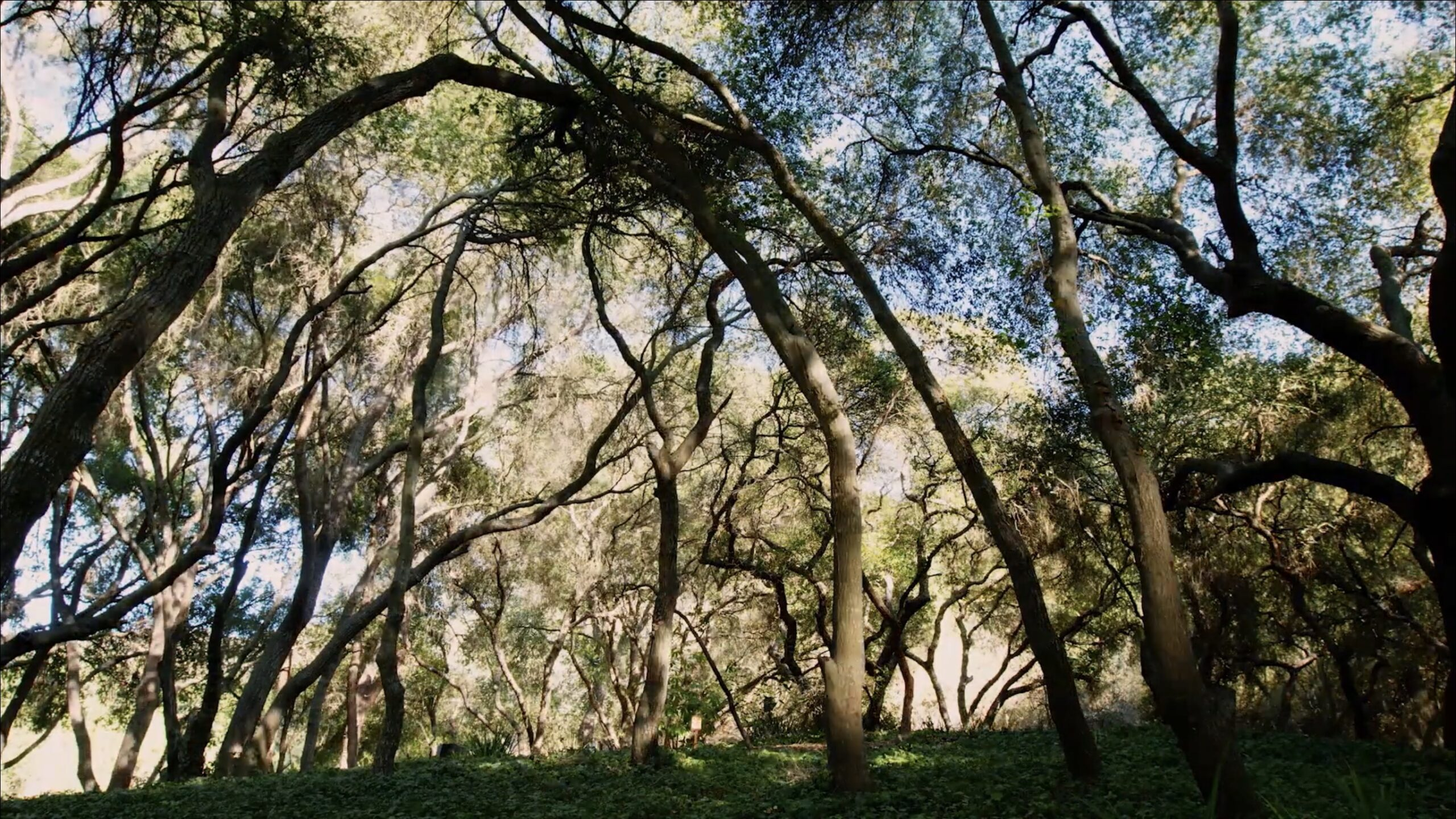John Muir knew that living among the trees can impact your life better. While getting back to nature, have you ever payed attention to forest shadows?