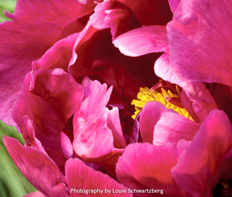 Louie Schwartzberg's time lapse films of flowers will be taking stage with Dolly Parton, Alicia Keys, Kylie Minogue The 2021 Fragrance Foundation Awards